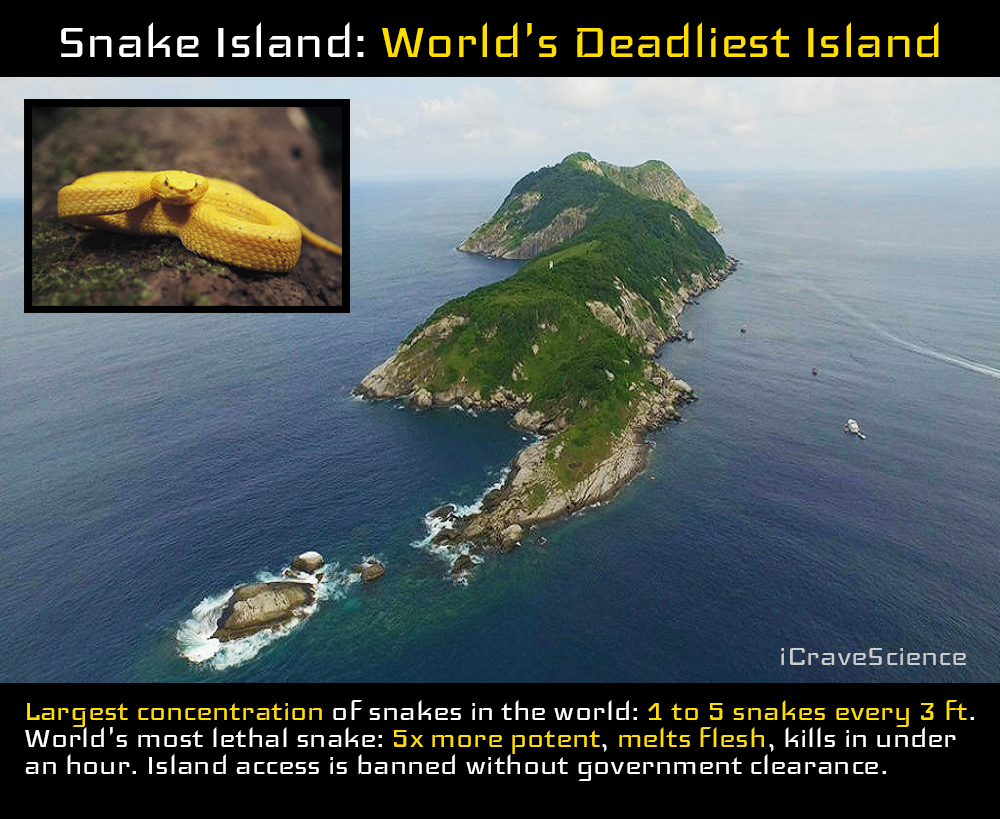 Deadly Snake Island In Brazil - The Most Beautiful Island ...
